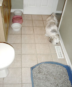 dog bathroom dog litter box
