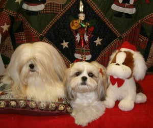 christmas puppies holiday season dogs