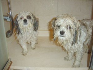 dog bath shower puppy grooming
