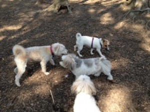 dog socialization leash free dog parks