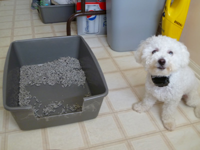 puppy litterbox training success story from missourilife with dogs and puppies blog. Black Bedroom Furniture Sets. Home Design Ideas