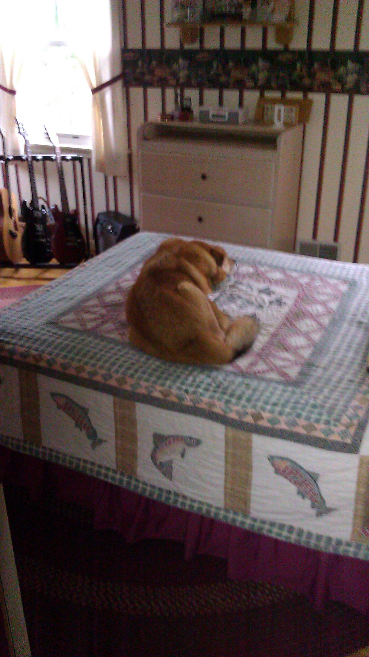 Should Dogs Sleep In The Bedroom Life With Dogs And