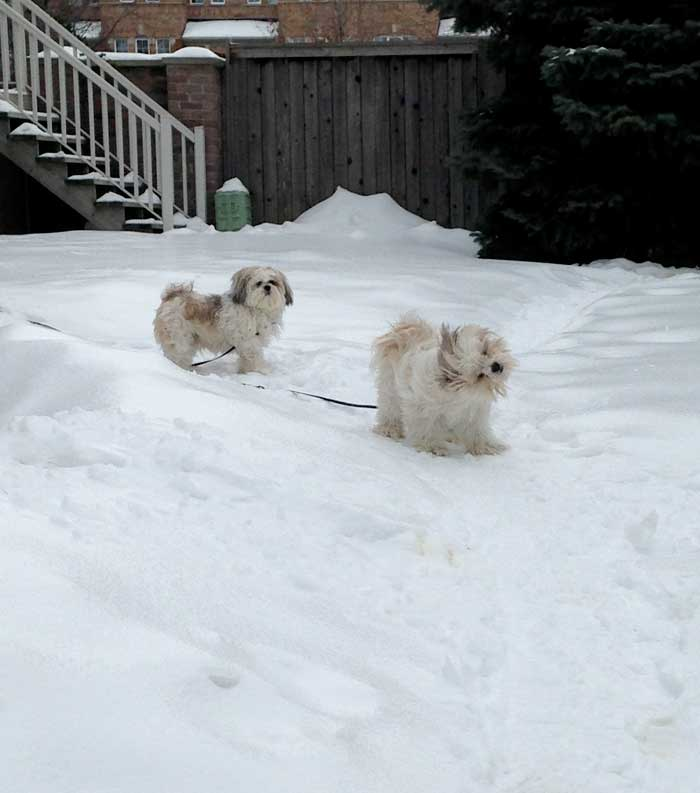 backyard coldest winter ontario dogs