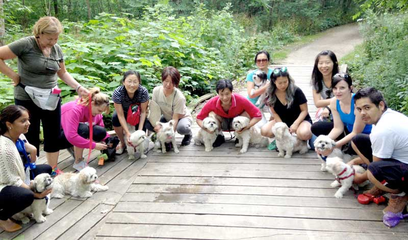 mississauga small dogs meetup groups