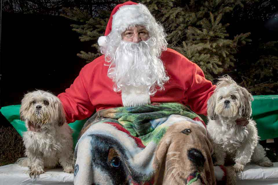 safe holiday season dogs safety