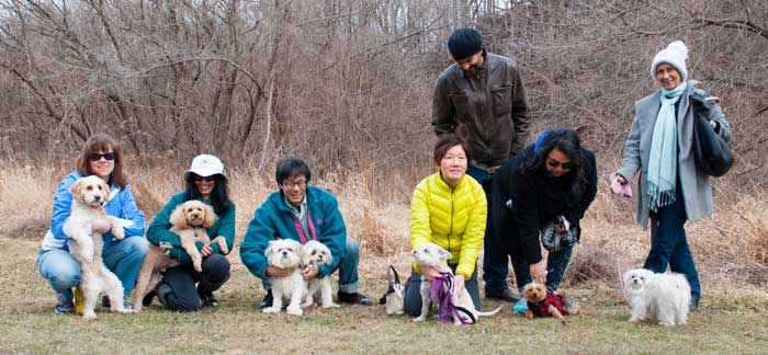 small dog meetup groups toronto mississauga