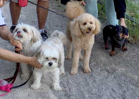 small dogs walks group outings