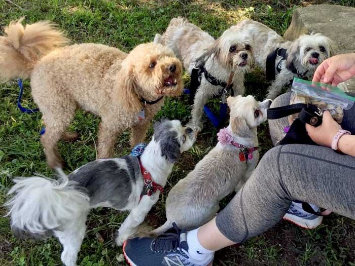 dog social goals health goal setting