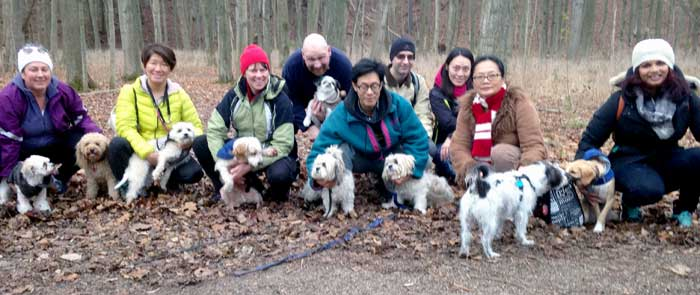 small dogs meetup groups dog socialization