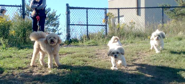 off leash free dog parks ontario toronto mississauga canada gta