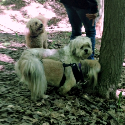 mississauga small dogs walks group
