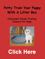 litter box training lhasa apso