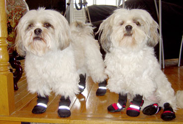 muttluks dog boots dog booties review