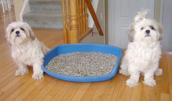 dog litter box training
