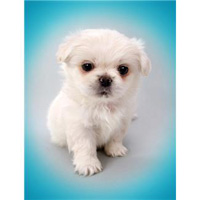image potty training dogs dog litter box puppies